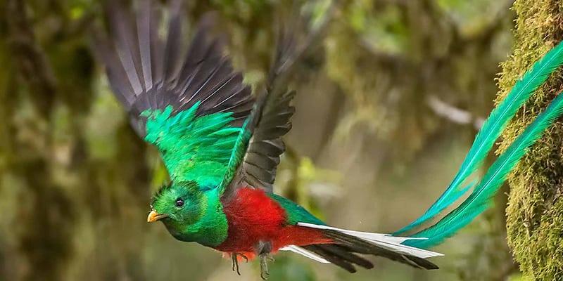Behind the Quetzal Bird